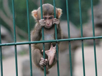 aap-turnen-in-het-raam