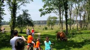 Wilde bizons gezien onder het fietsen